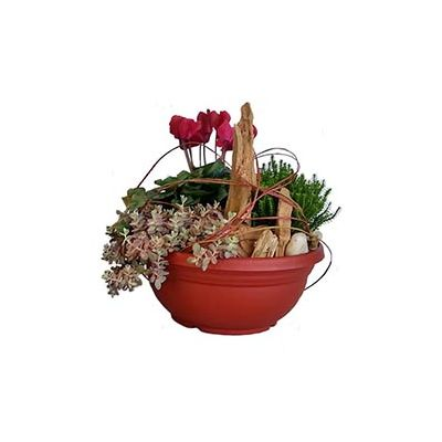 ORION RED BULB BOWL
