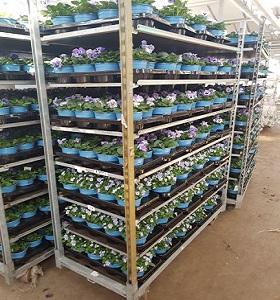 Porters Fushias showcase the 100% recyclable range of TEKU pots