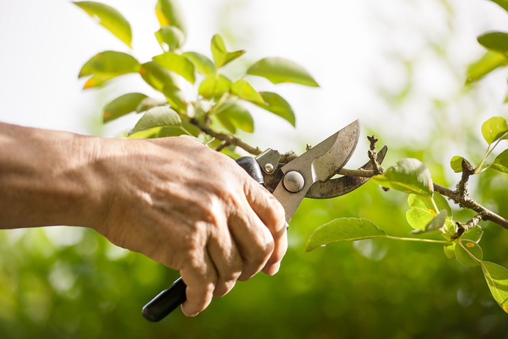 Prune and prepare: help your customers get set for spring