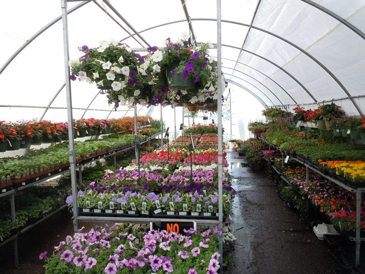 Get your nursery working at its best this summer