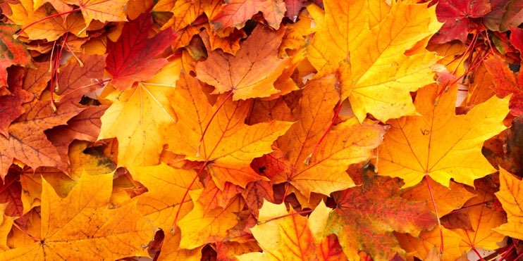 Five horticultural supplies for Autumn - JFH Horticultural Supplies