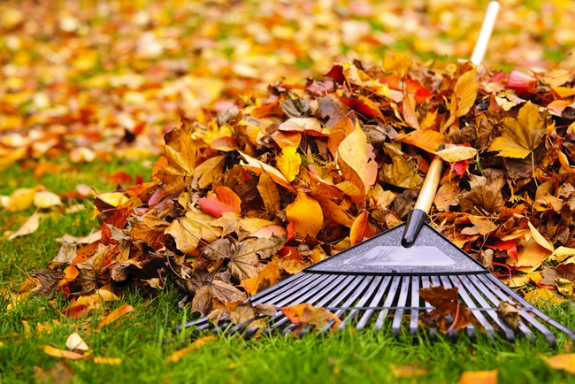 October gardening jobs whatever the weather - JFH