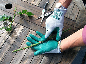 Using gardening gloves: what horticultural retailers should know | JFH Horticultural Supplies