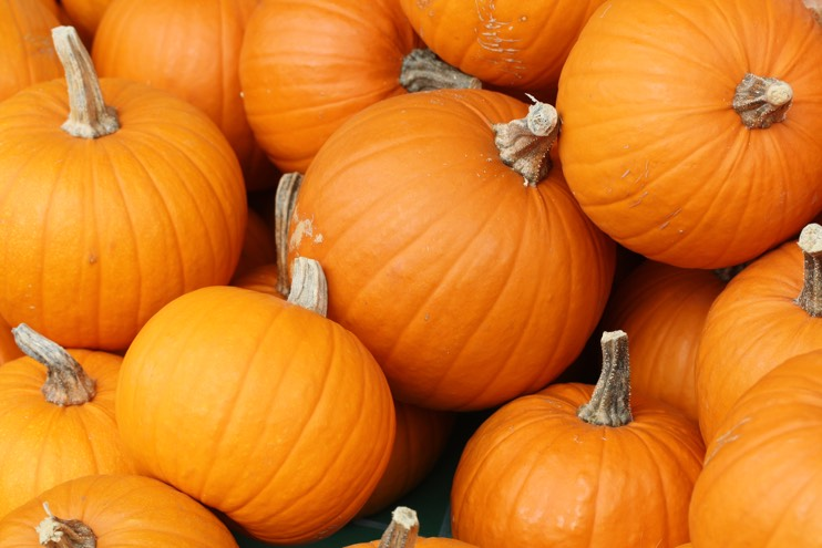 How to get your business' pumpkins perfect for next year - JFH