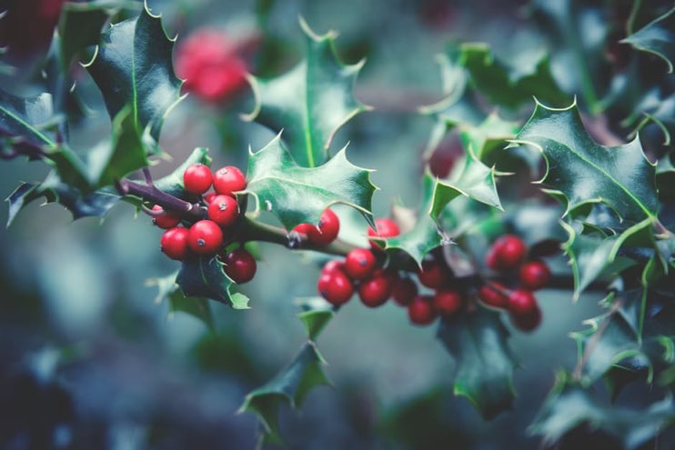 Essential horticultural supplies for the New Year - JFH