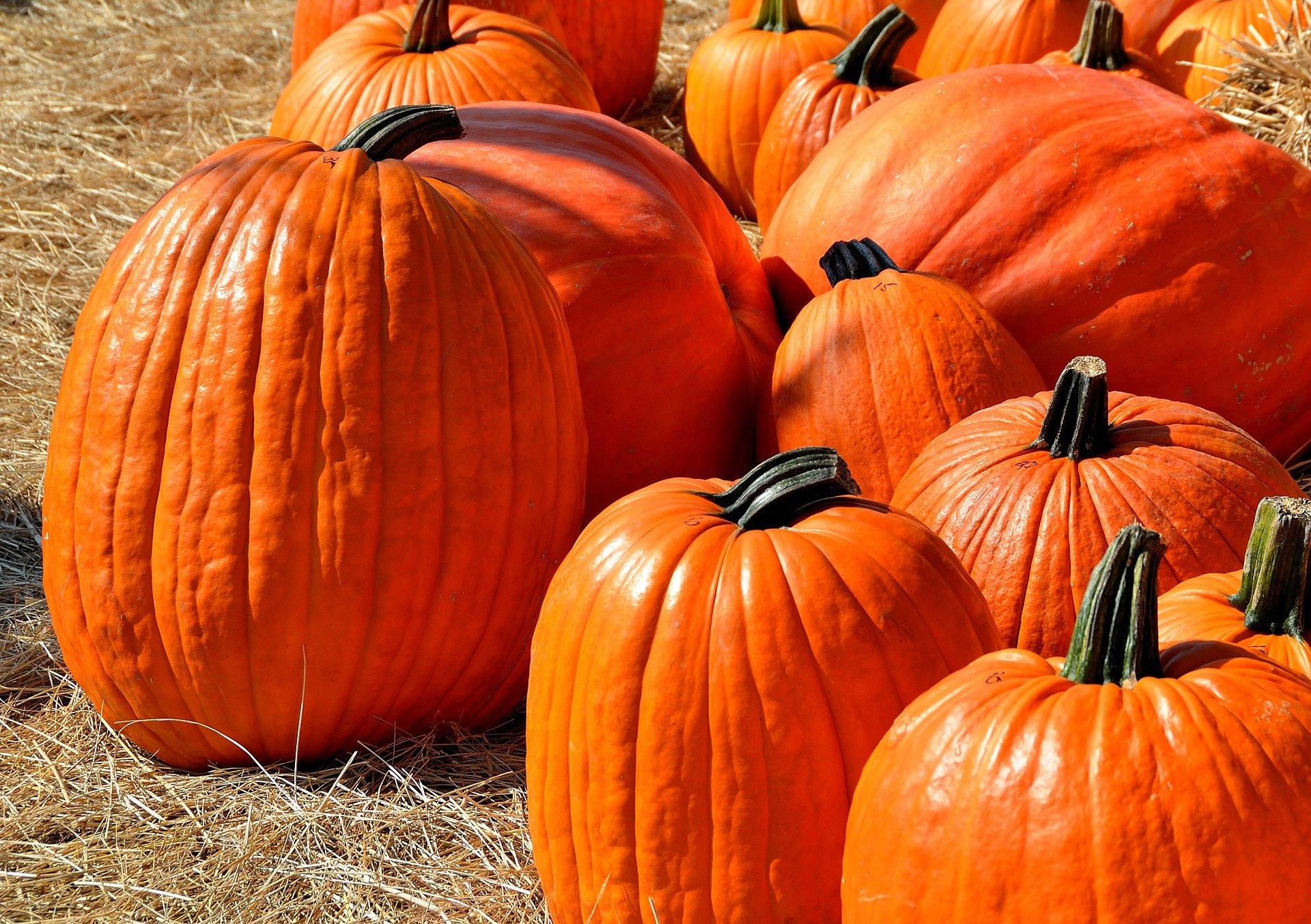 Pumpkin Growing Tips for next Halloween